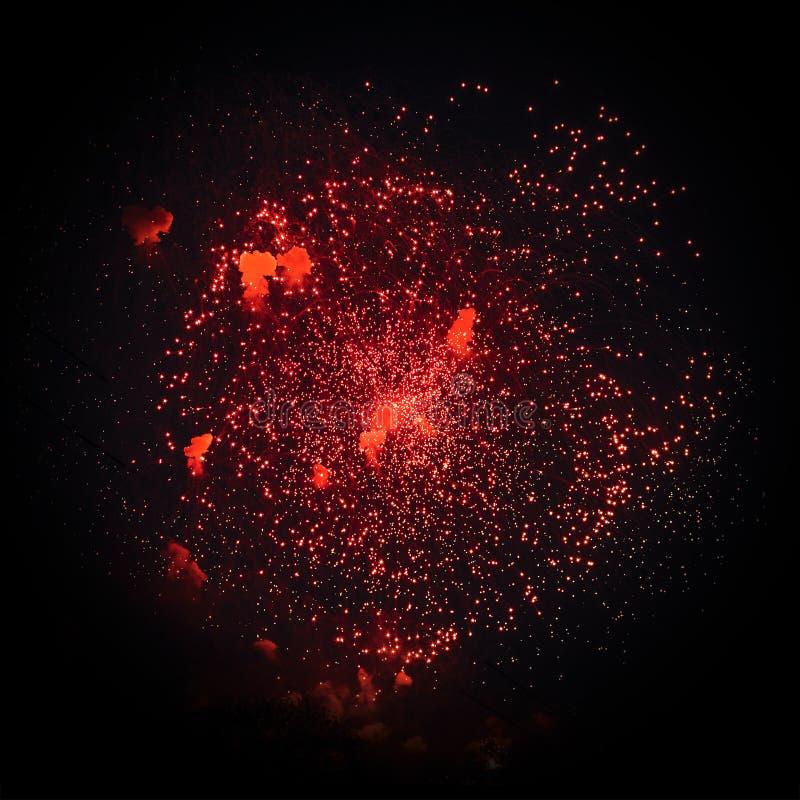 Roter Gruß wird auf schwarzem Hintergrund lokalisiert stockfotos
