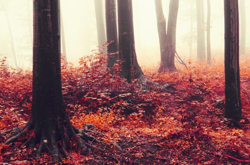 Roter Herbstwald mit Nebel stockfotografie