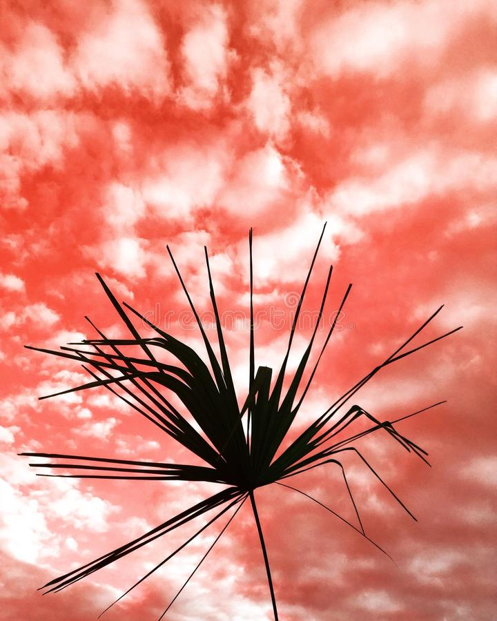 Download Roter Himmel stockbild. Bild von gras, ansicht, himmel - 96929169