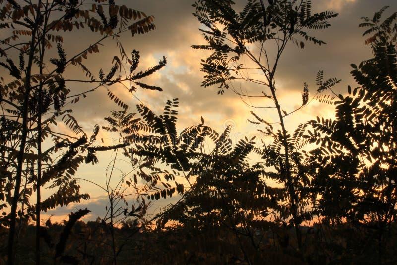 Roter Himmel durch Blätter stockfoto