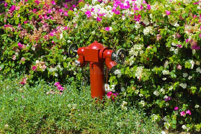 Roter Hydrant auf einem Hintergrund des grünen Grases Hydrant oder lizenzfreies stockbild