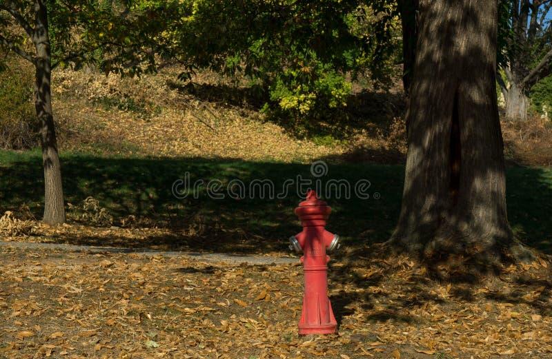 Roter Hydrant an einigen Bäumen stockfotografie