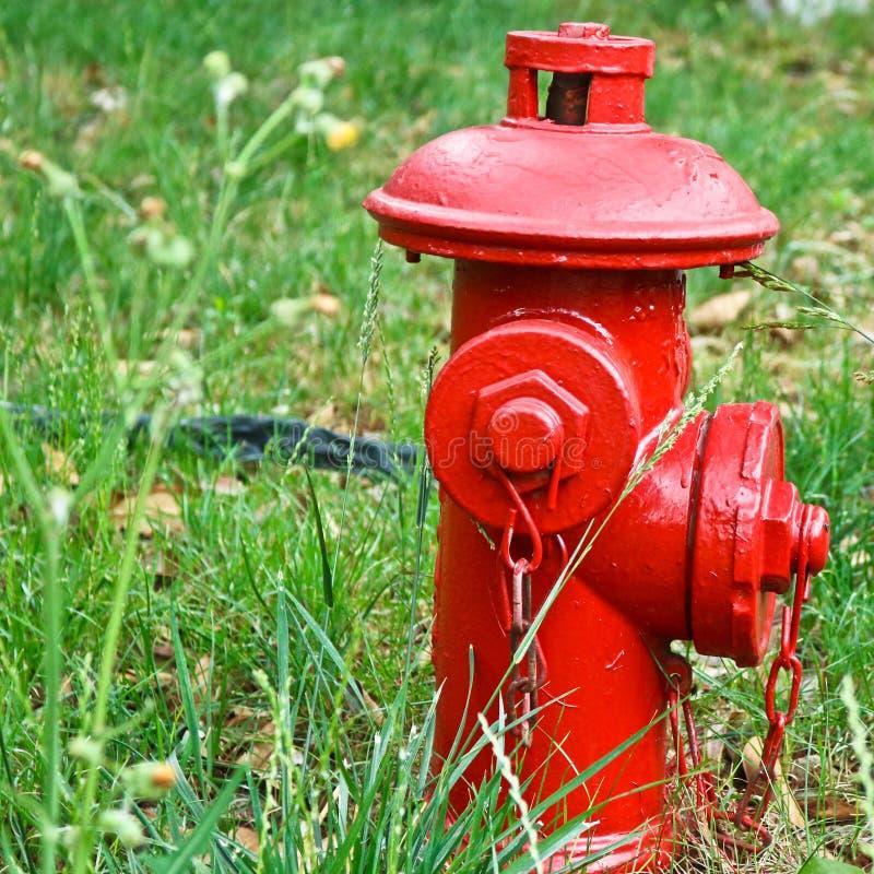 Roter Hydrant im Studentencampus stockbilder