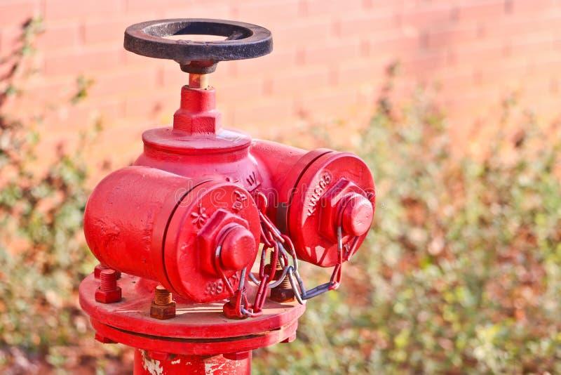 Roter Hydrant im Studentencampus lizenzfreie stockfotos