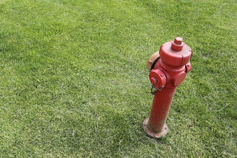 Roter Hydrant lokalisiert in einem Gras lizenzfreies stockbild