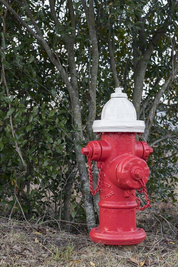 roter Hydrant neben Gebüsche stockbilder