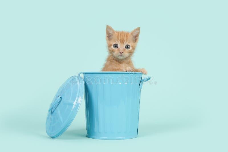 Roter Ingwer 8-Wochen-alte Babykatze in einem blauen Mülleimer auf einem Türkishintergrund lizenzfreies stockbild