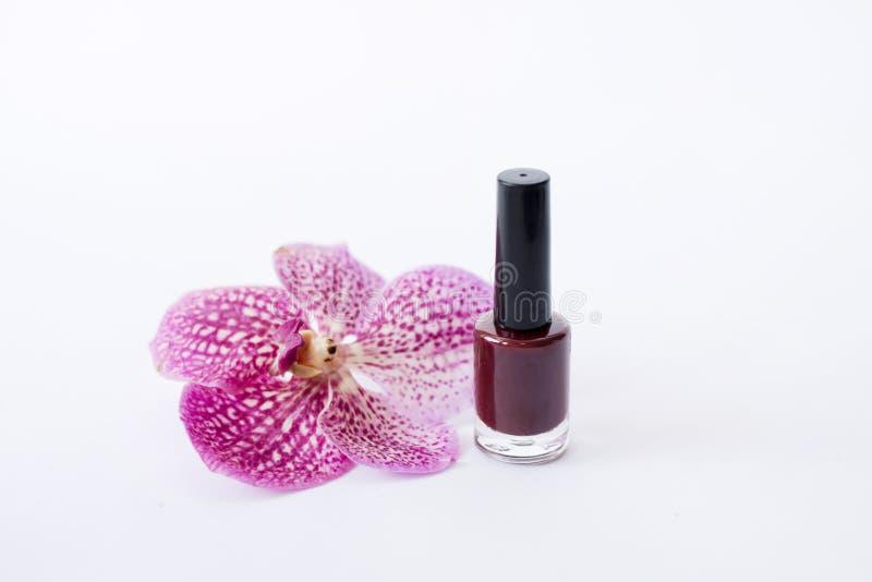Roter Nagellackstand nahe schöner rosa Blume lizenzfreies stockbild