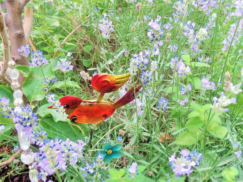 Roter orange Vogel - Garten-Dekoration im Lavendar Lavandula Garden stockfoto
