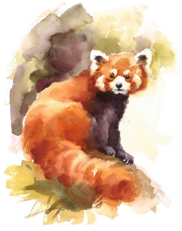 Roter Panda Watercolor Animal Illustration Hand malte vektor abbildung