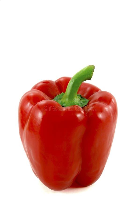 Roter Paprika lizenzfreie stockfotografie