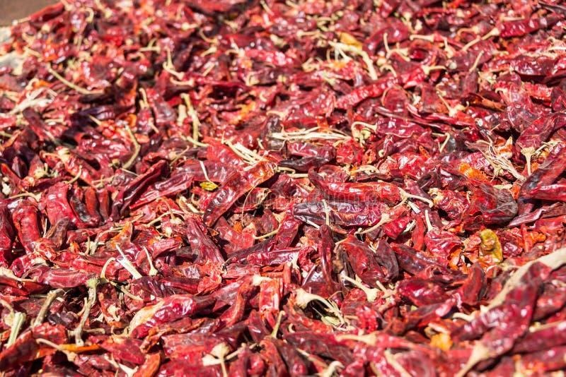 Roter Paprika, der in Bethlehem von Galiläa wächst stockfotografie