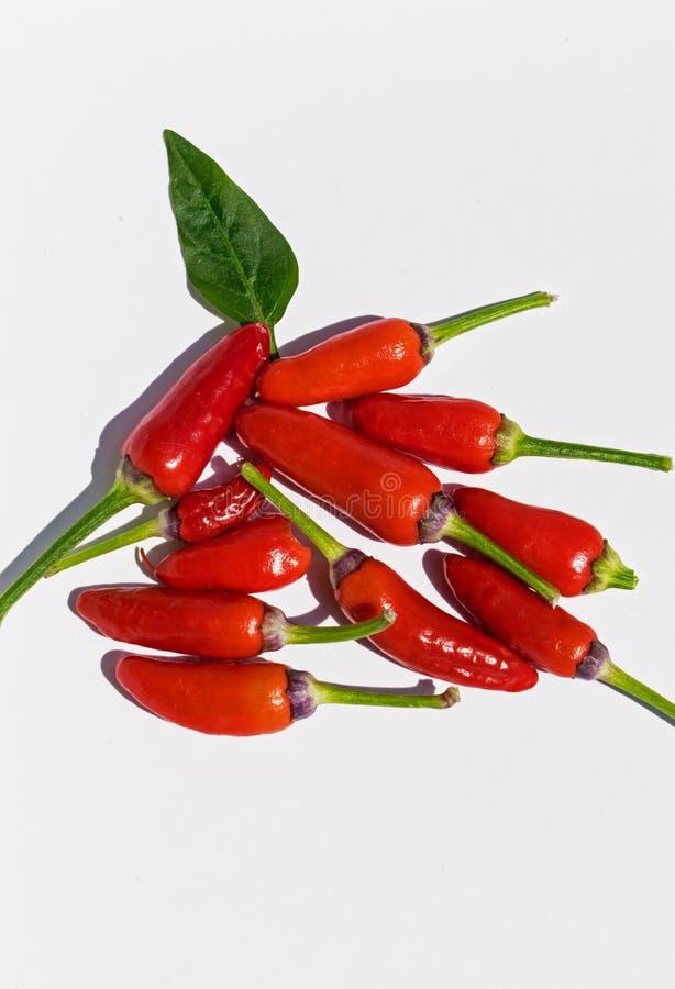 Roter Pfeffer sehr heiß die Scoville-Skala lizenzfreies stockfoto