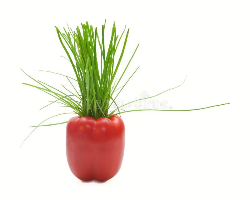 Roter Pfeffer und grüne Zwiebel lizenzfreie stockfotografie