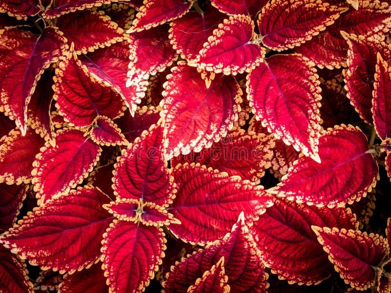 Roter Pflanzenblätterhintergrund 01 stockbild