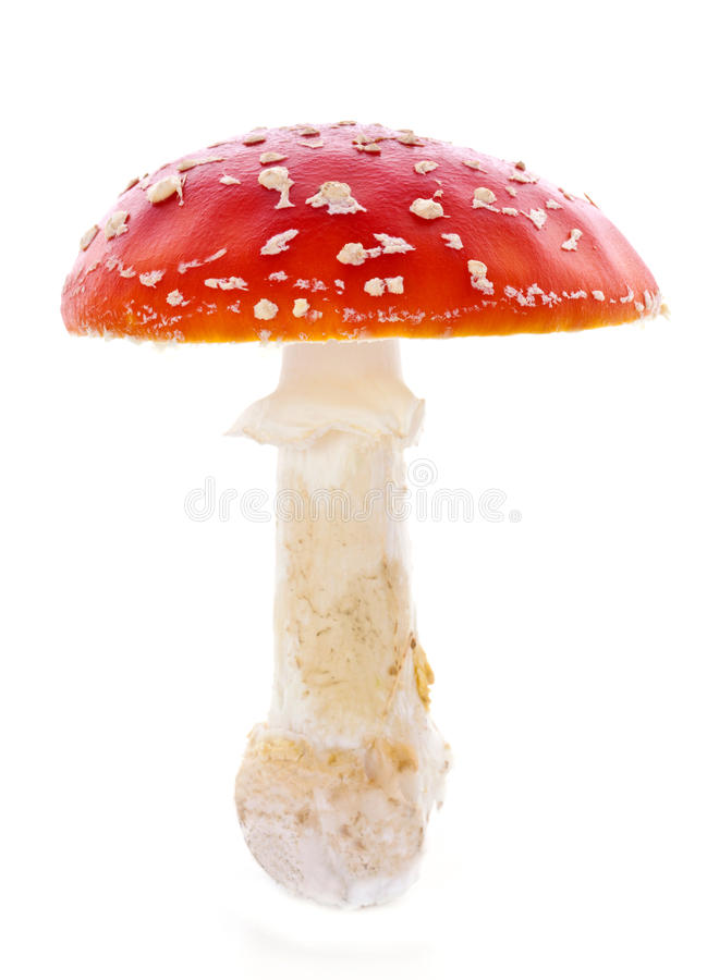 Roter Pilz stockbild