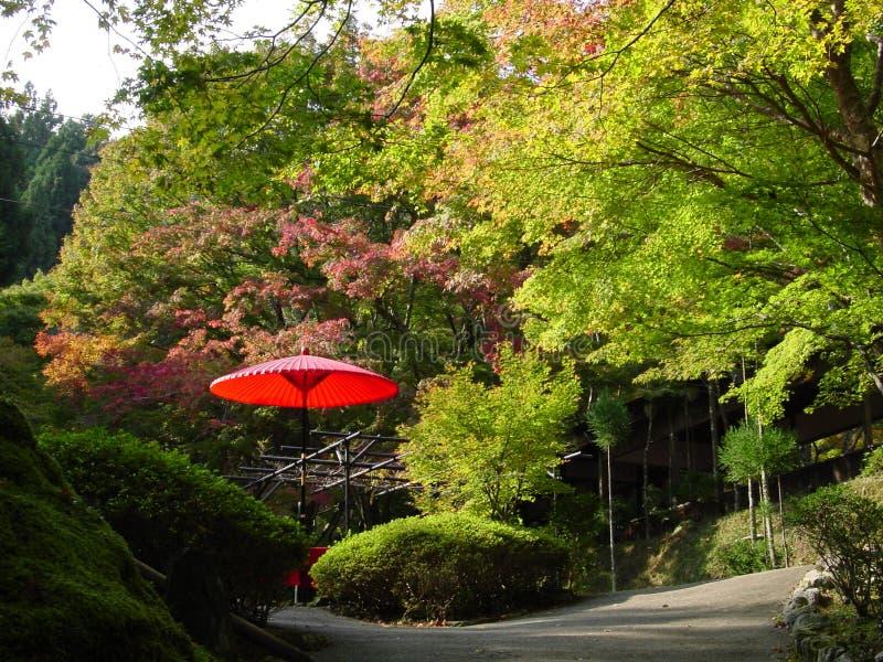 Roter Regenschirm im Herbst-Park in Japan stockfotos