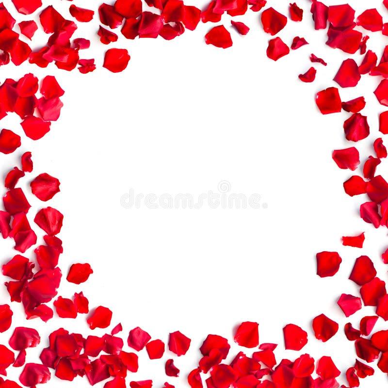 Roter Romantischer Rahmen Der Rosafarbenen Blumenblätter Stockfoto ...