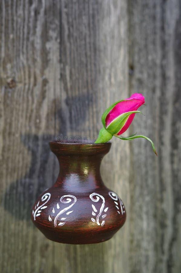 Roter Rosebud stockfotos
