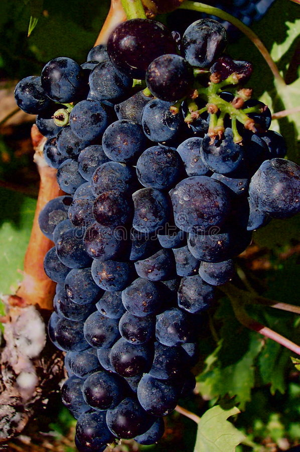 Roter Rotwein