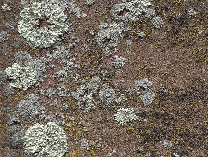 roter sandstein mit flechten hintergrund stockfoto bild von silber kirchhof 56111674. Black Bedroom Furniture Sets. Home Design Ideas