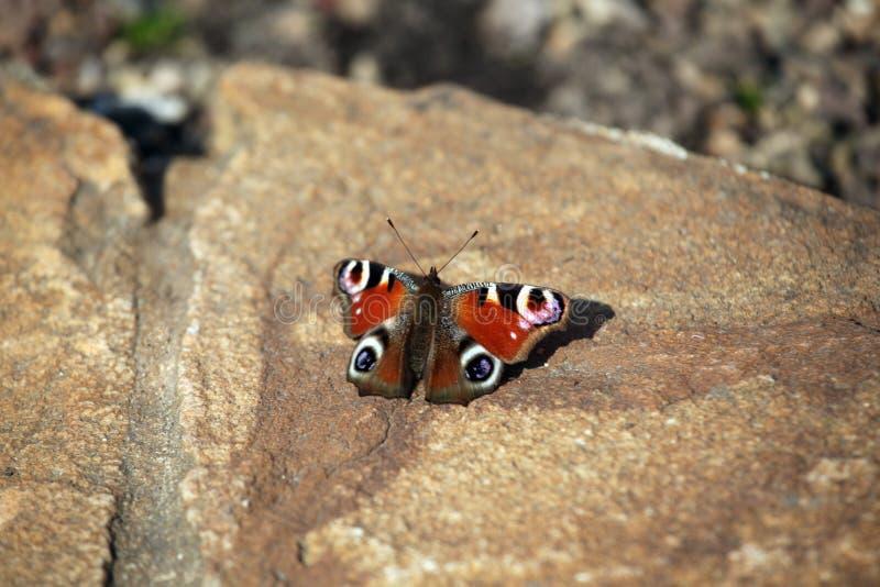Roter Schmetterlingssteinhintergrund stockbilder