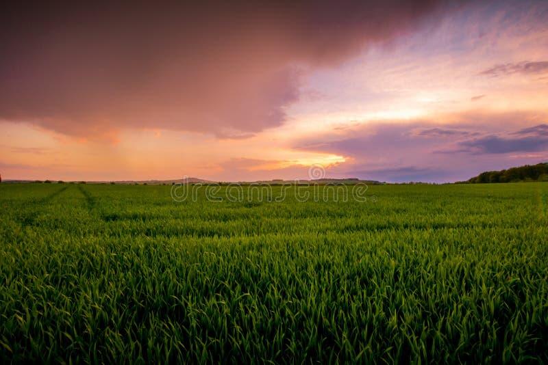 Roter Sonnenuntergang über grünem Feld stockfotografie