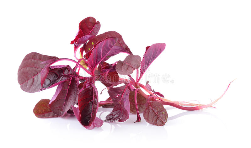 Roter Spinat lizenzfreie stockfotos