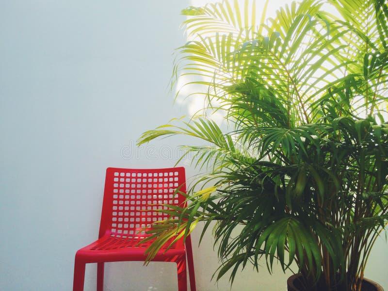 Roter Stuhl u. Palme stockfotografie