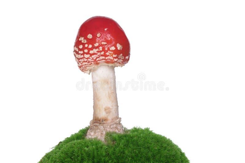 Roter Toadstool stockfoto