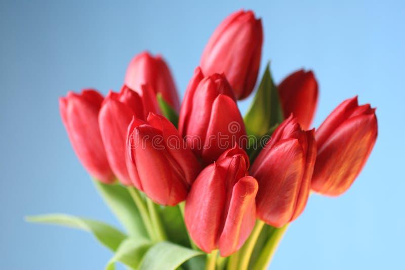 Roter Tulpeblumenstrauß stockfoto