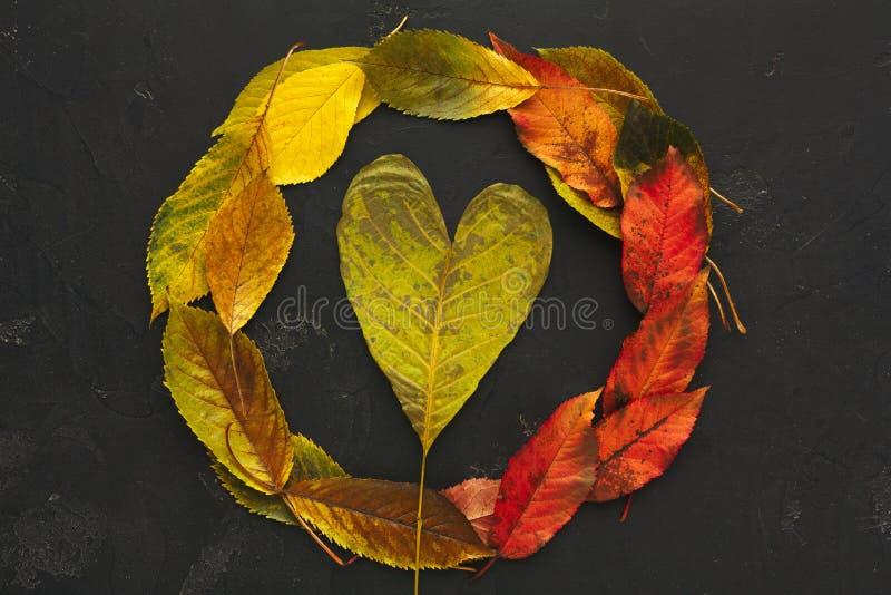 Roter und gelber Blattrahmen des Herbstes auf dunklem Hintergrund stockfotografie