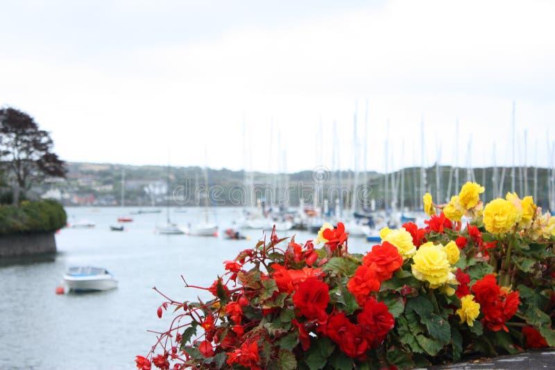 Roter und gelber Blumen Kinsale-Hafen Cork Ireland stockbilder