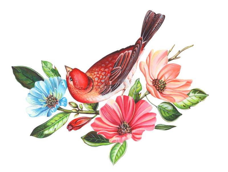 Roter Vogel auf Blumenniederlassungen Hand gezeichnete Aquarellmalerei auf weißem Hintergrund Beschneidungspfad eingeschlossen Il stockbilder