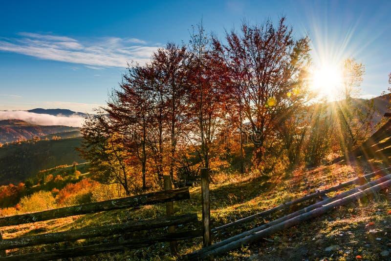 Roter Wald auf Abhang hinter dem Zaun bei Sonnenaufgang lizenzfreie stockbilder