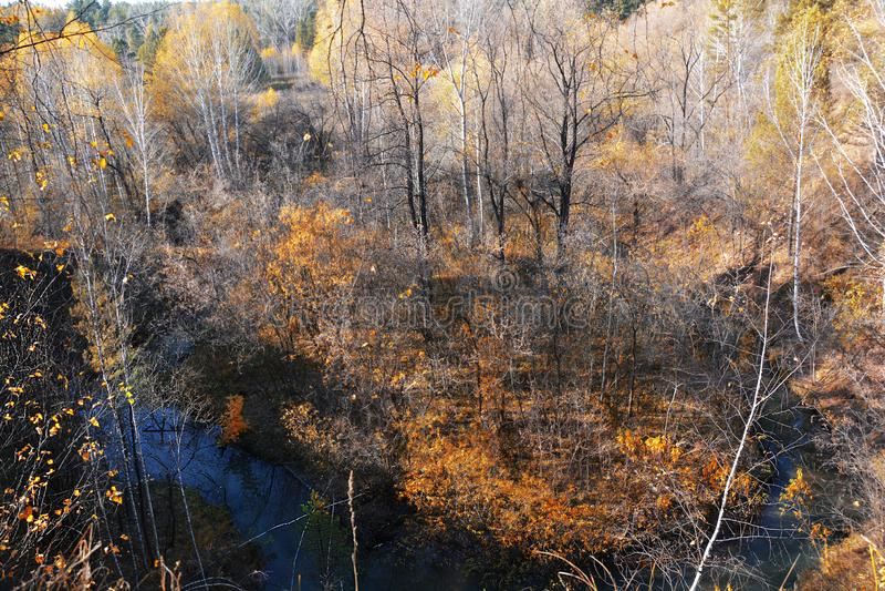 Roter Wald des Herbstes und kleines Flussfotobild stockbilder