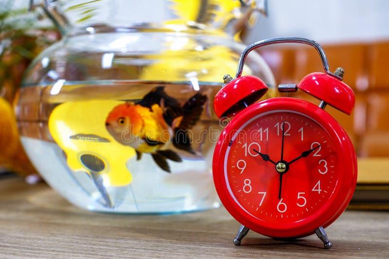 Roter Wecker mit Goldfisch in Dutzend Gläsern auf einem hölzernen Vorsprung lizenzfreie stockfotos