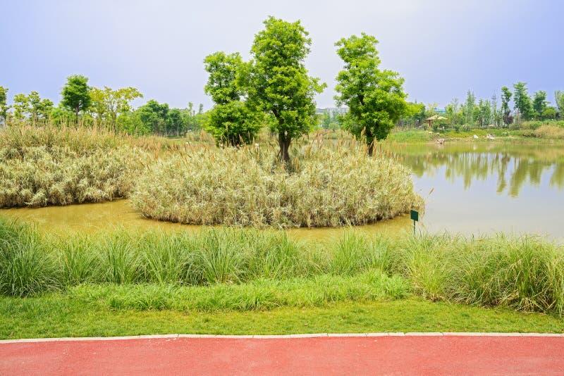 Roter Weg entlang schilfigem lakeshore im sonnigen Frühling lizenzfreie stockfotos