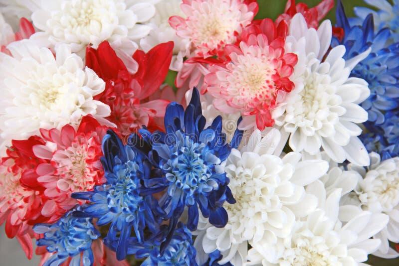 Roter weißer blauer Chrysanthemen-Blumen-Blumenstrauß stockbild