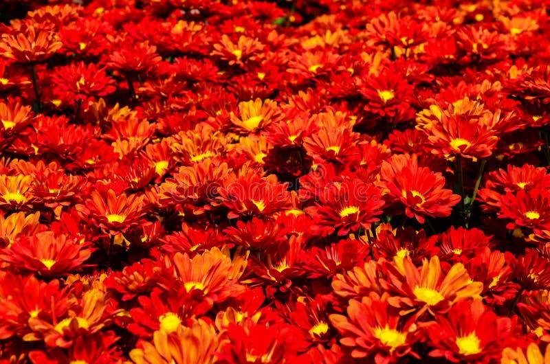Rotes Blumenpflanzen lizenzfreies stockbild