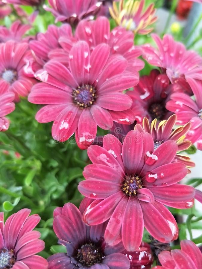 Rotes flowerd lizenzfreies stockbild