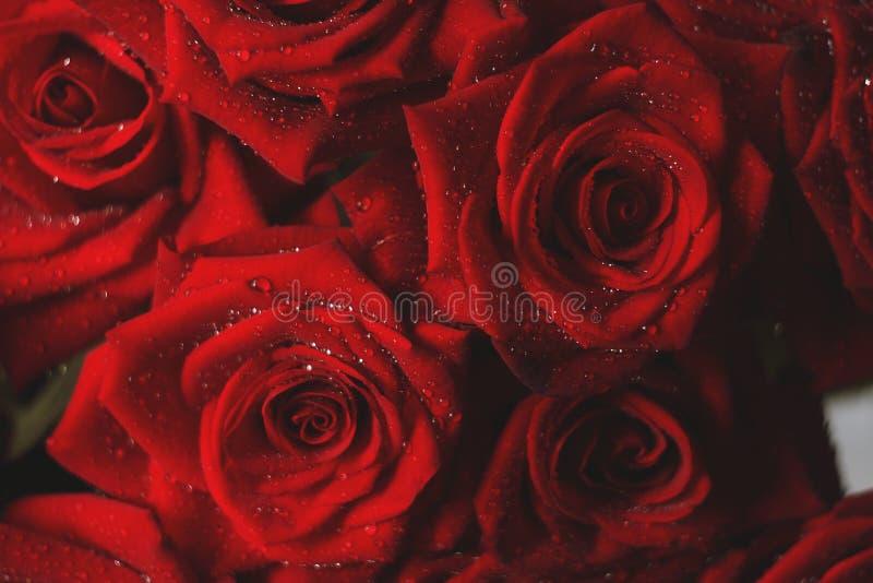 Rotes Gartenrosen clouse oben lizenzfreie stockbilder