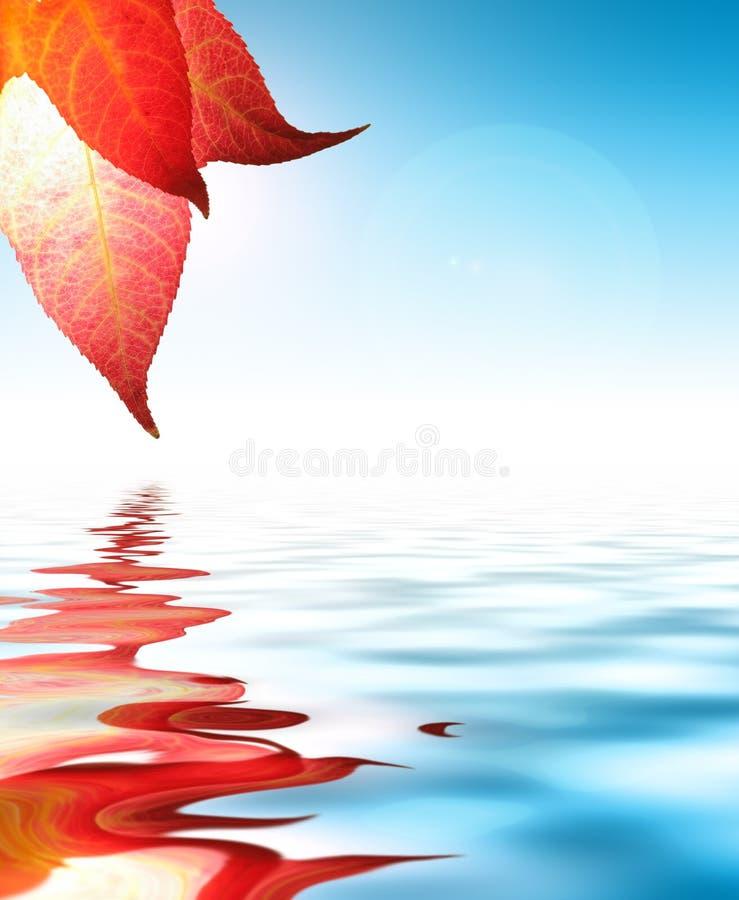 Rotes Herbstblatt lizenzfreies stockbild