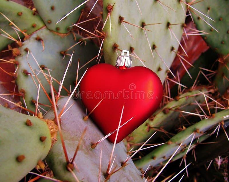 Rotes Herz fing auf den scharfen Dornen eines Kaktus stockfoto