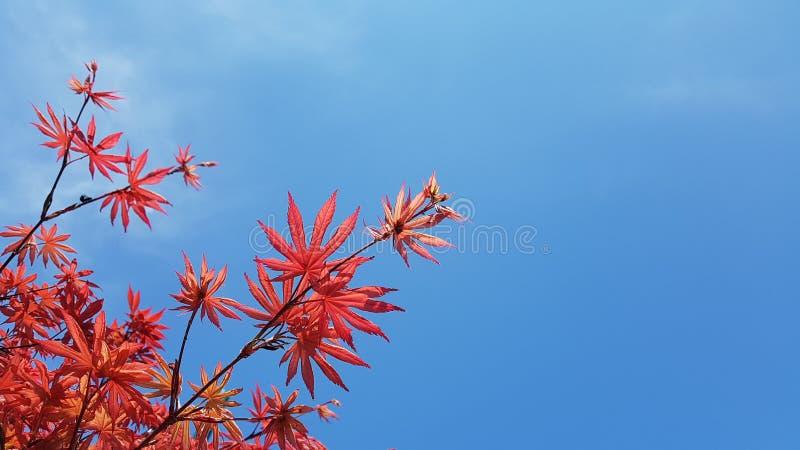 Rotes Himmelgartenschönheitssommer-Inspirationsdesign lizenzfreie stockfotos