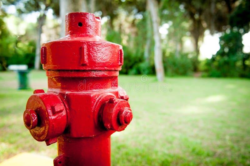 Rotes Hydrantbrandverhütungssystem im grünen Holz lizenzfreies stockfoto