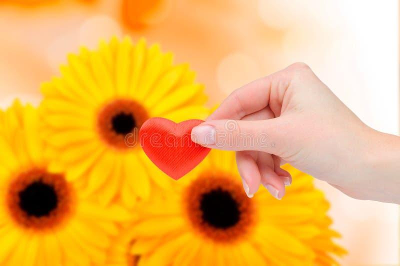 Rotes Inneres in der weiblichen Hand lizenzfreies stockbild