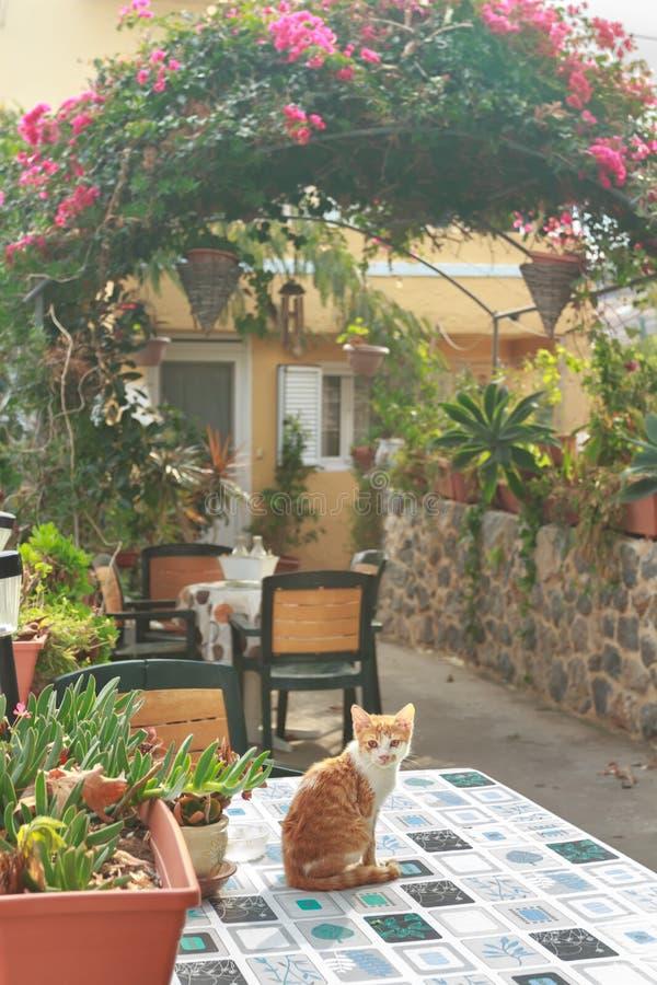 Rotes Kätzchen innerhalb des griechischen traditionellen Patios mit lizenzfreies stockfoto