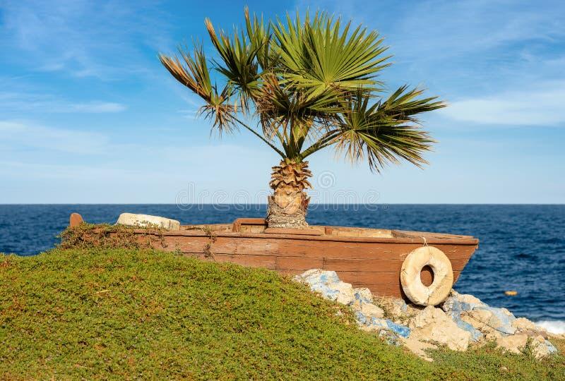 Rotes Meer Ägypten - Palme in einem hölzernen Boot stockbilder