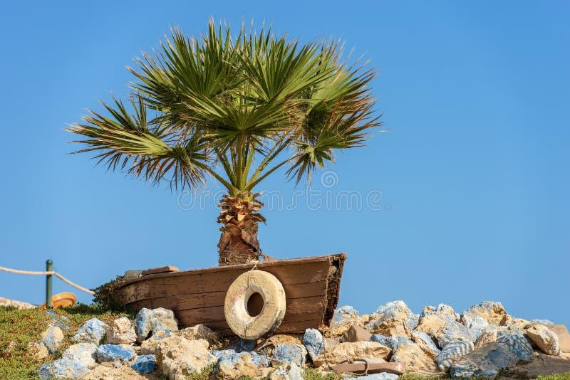 Rotes Meer Ägypten - Palme in einem hölzernen Boot lizenzfreie stockbilder